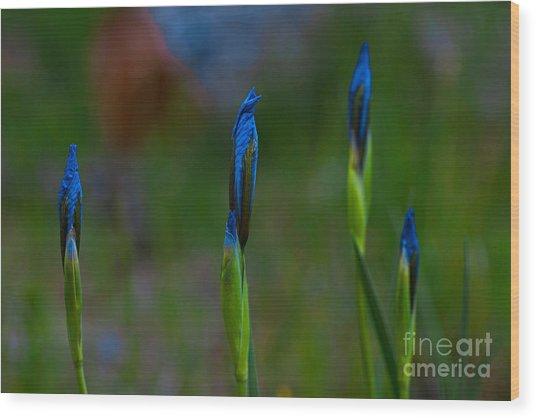 Blue Sisters Wood Print