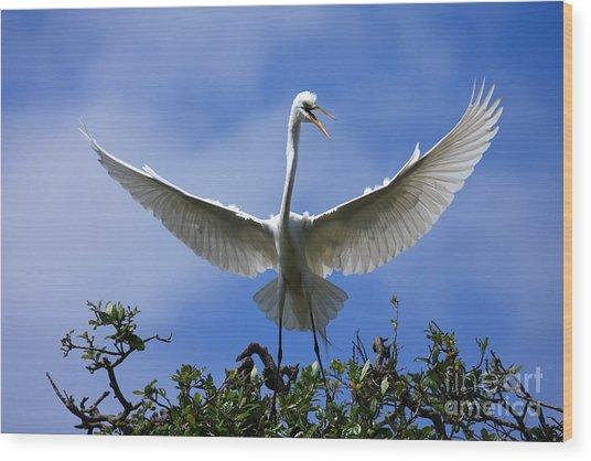 Blue Sky Landing Wood Print