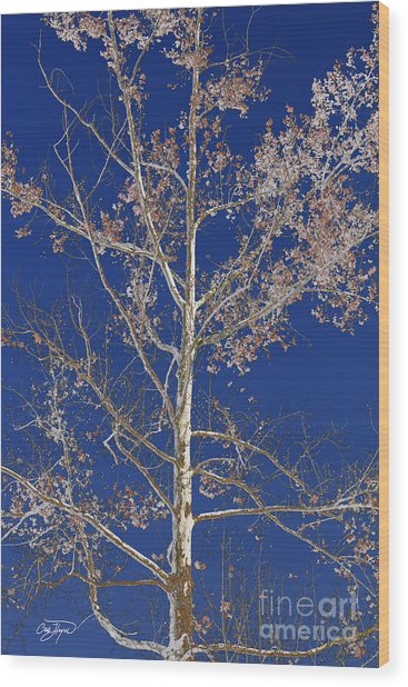 Blue Sky With A Twist Of Birch Wood Print