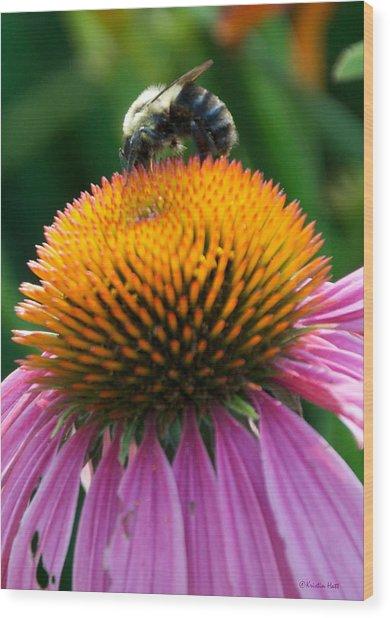 Blue Striped Bee Wood Print