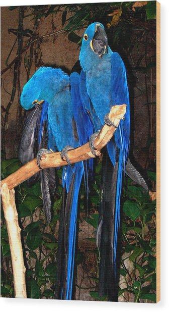 Blue Velvet Wood Print