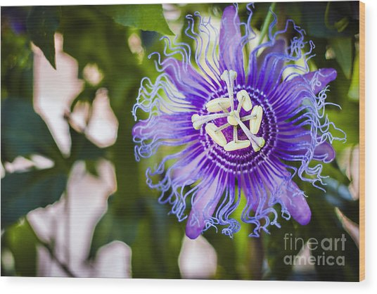 Blue Violet Wood Print by Lacie Oakey