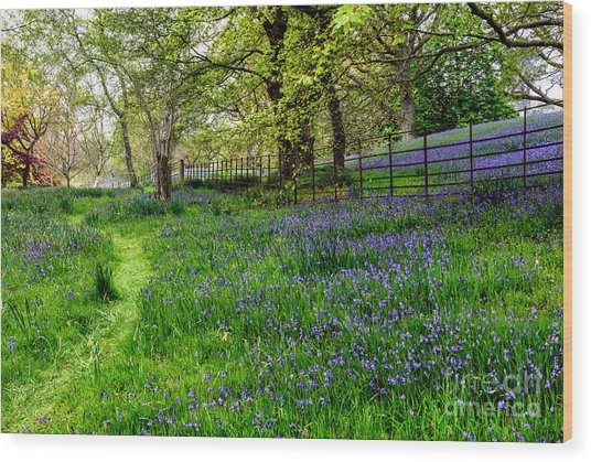 Bluebell Way Wood Print