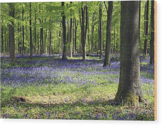 Bluebell Wood Uk Wood Print