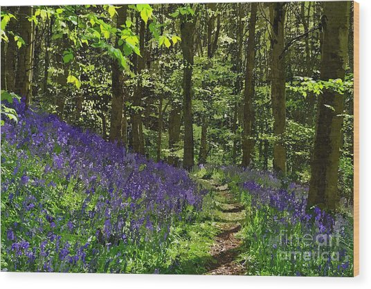 Bluebell Woods Photo Art Wood Print