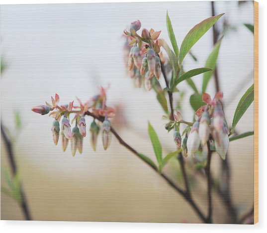 Blueberry Bush Wood Print by Giffin Photography