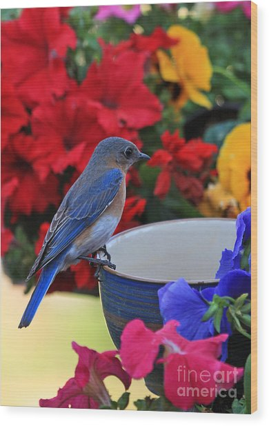 Bluebird Breakfast Wood Print