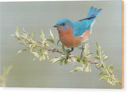 Bluebird Floral Wood Print