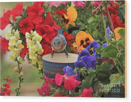 Bluebird Garden Wood Print
