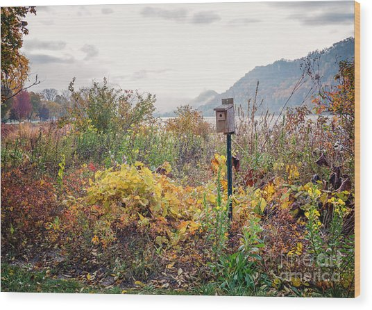 Wood Print featuring the photograph Bluebird House At East Lake Winona by Kari Yearous