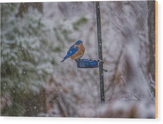 Bluebird In Snow Wood Print