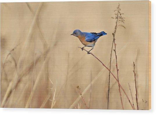 Bluebird Meadow Wood Print