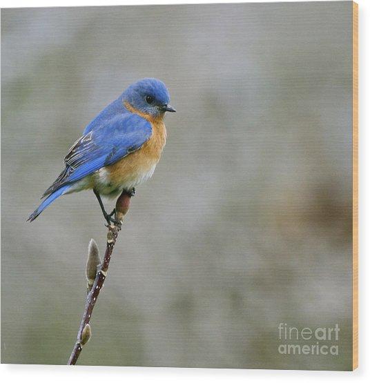 Bluebird On My Tree Wood Print