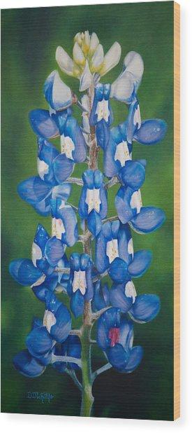 Bluebonnet Buffalo Clover Wood Print