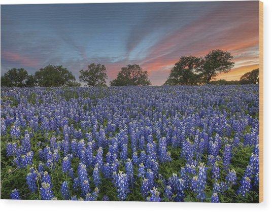 Bluebonnet Field Of Glory Wood Print