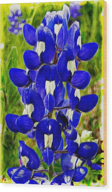 Bluebonnet Wood Print
