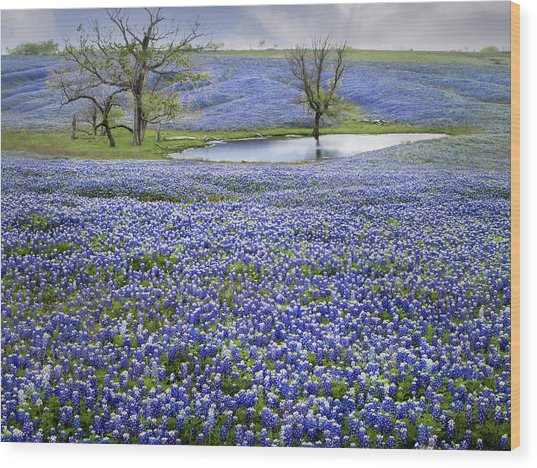 Bluebonnet Pond Wood Print