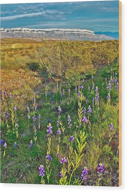 Bluebonnets And Creosote Bushes In Big Bend National Park-texas Wood Print