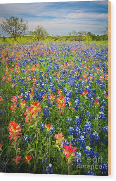 Bluebonnets And Prarie Fire Wood Print