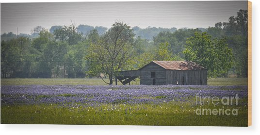 Bluebonnets By The Barn Wood Print
