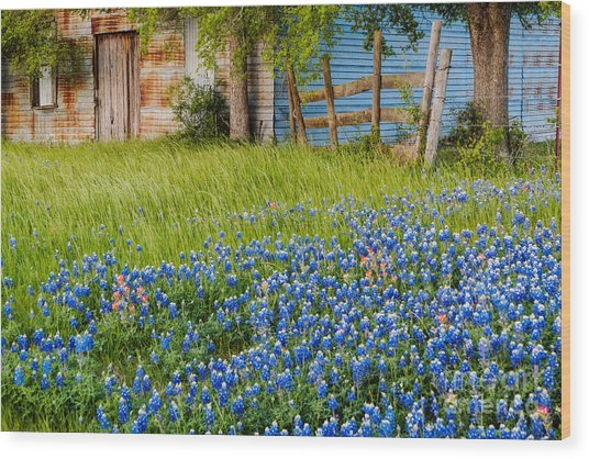 Bluebonnets Swaying Gently In The Wind - Brenham Texas Wood Print