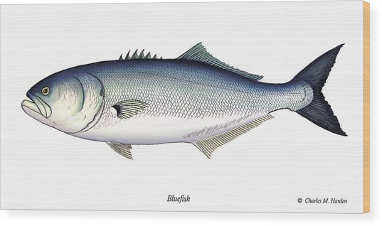 Bluefish Wood Print