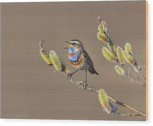 Bluethroat Wood Print