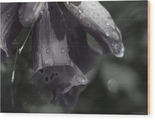 Flowers And Tiny Water Droplets Wood Print