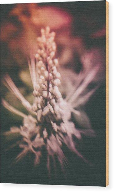 Blured Bloom Wood Print