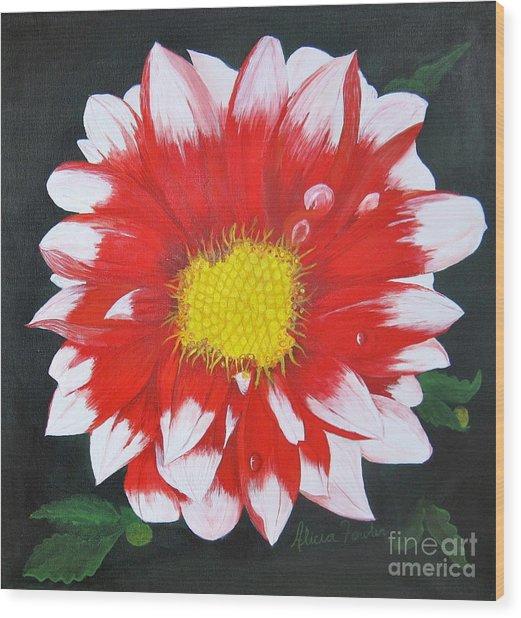 Blushing Dahlia Wood Print