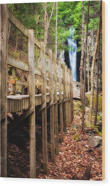 Boardwalk To Song  Wood Print
