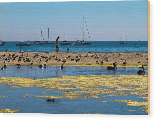 Boats And Birds Wood Print by Bernard  Barcos