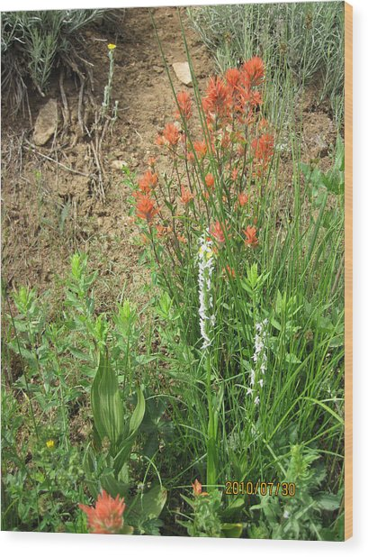 Bog Orchid Red Paintbrush On Mt A Wood Print by Dan A  Barker