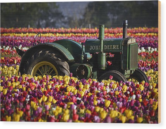 Bogged Down By Color Wood Print