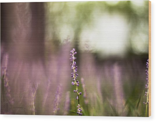 Bokeh With Purple Wildflower Wood Print