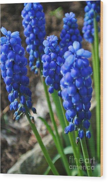 Bonny Blue Wood Print