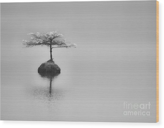 Bonsai At Fairy Lake Wood Print