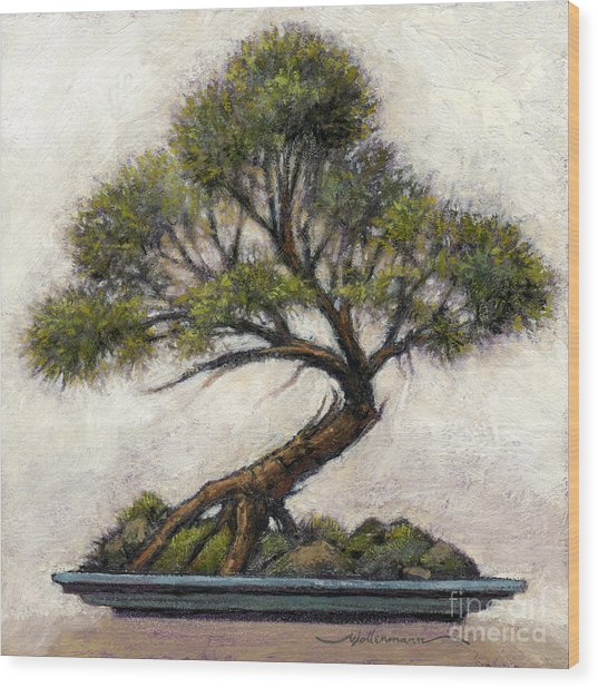 Bonsai Cedar Wood Print