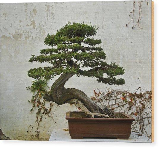 Bonsai Suzhou China Wood Print