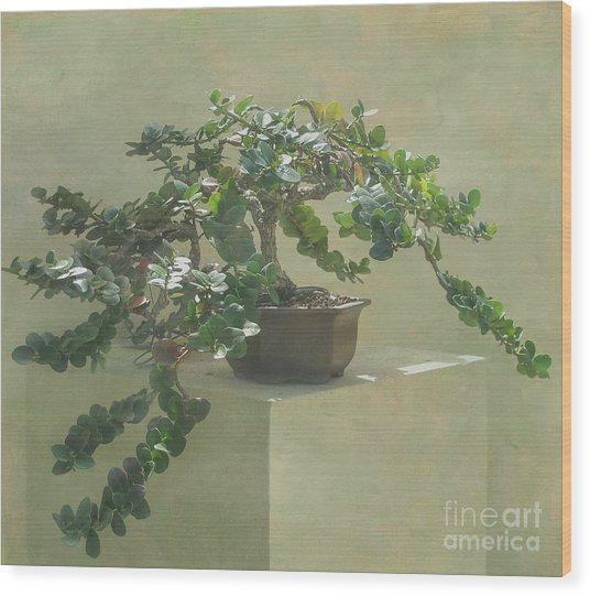 Bonsai Tree Wood Print
