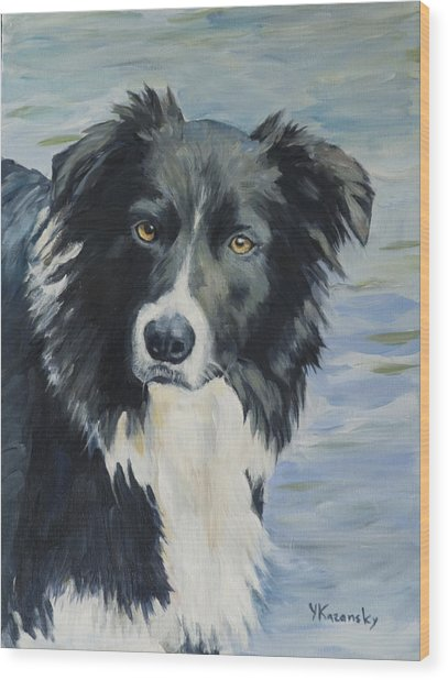 Border Collie Portrait Wood Print