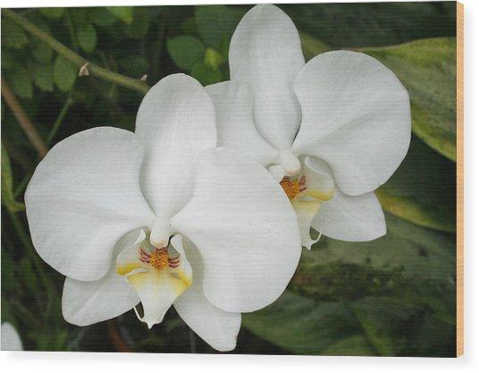 Bosom Blossoms Wood Print