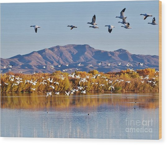 Bosque Del Apache Wood Print