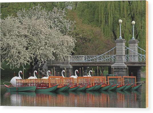 Boston Swan Boats  Wood Print