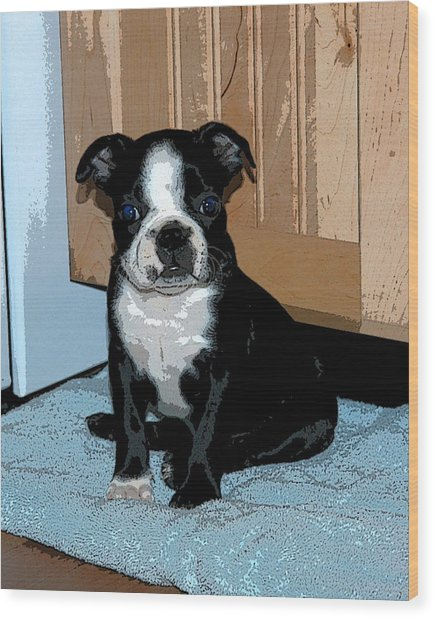 Boston Terrier Art02 Wood Print