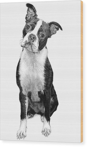 Boston Terrier Wood Print by Rob Christensen