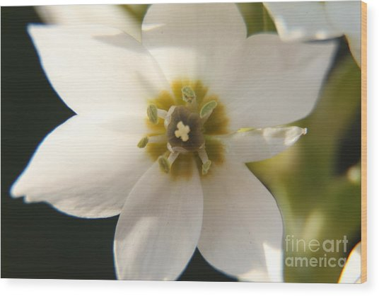 Botanical Purity Wood Print