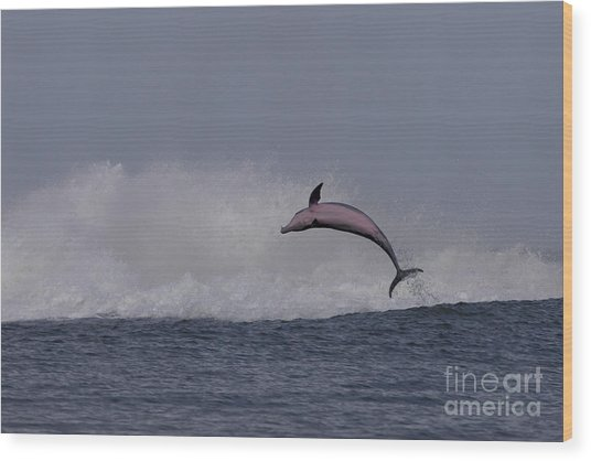 Bottlenose Dolphin Photo Wood Print
