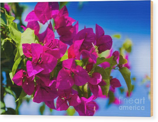 Bougainvillea Wood Print by Mary Ann Tardif