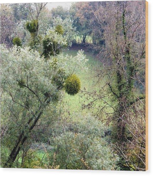 Mistletoe Ball Wood Print